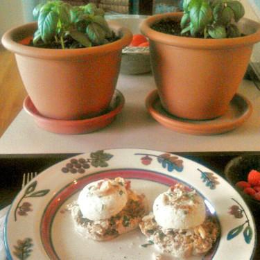 Lobster Eggs Benedict Recipe | SideChef